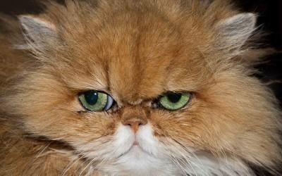 מלכוד הכעס: על הכועס, הנכעס ומה שביניהם